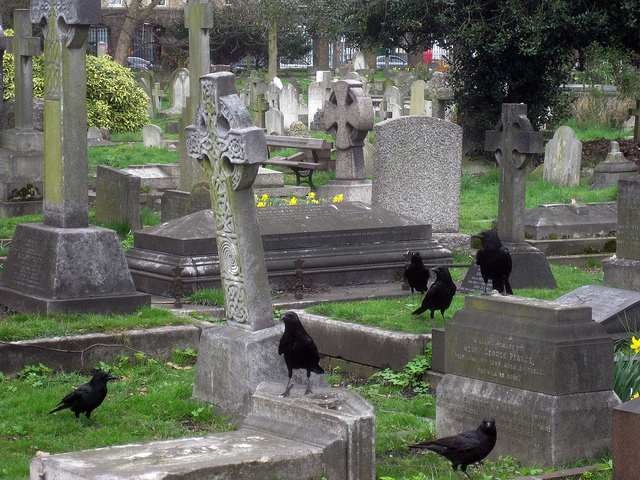 Brompton Cemetery crows on grave, by Matt Brown on Flickr