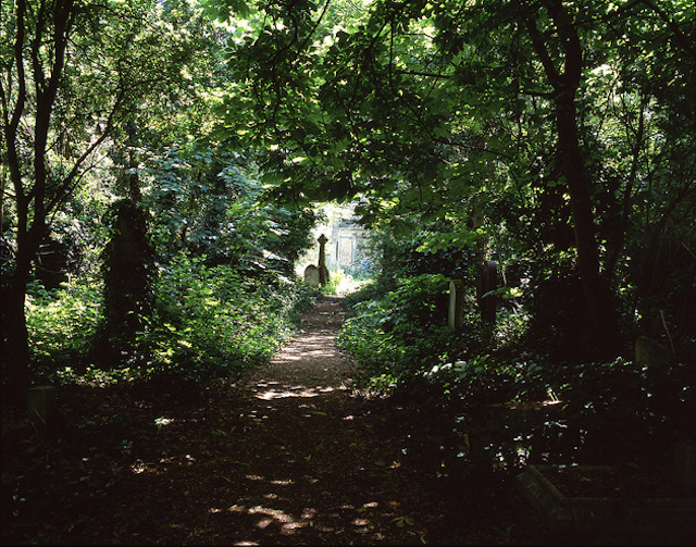 Abney Park Cemetery looks more like a park, by D1v1d on Flickr