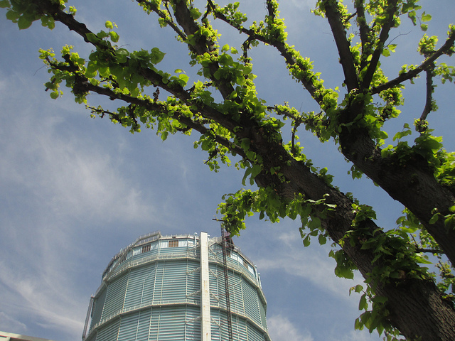 London Tree Week 2014