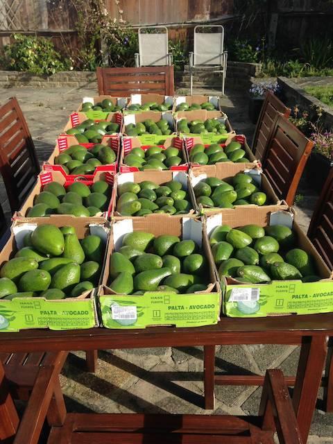 avocado-3.jpg