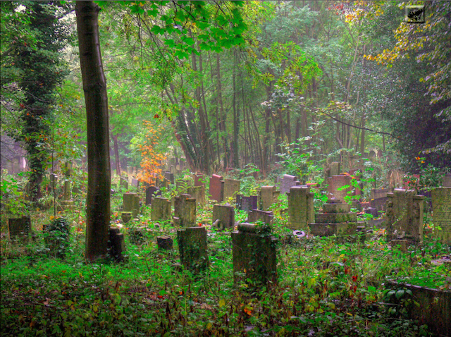 An ethereal picture of Tower Hamlets Cemetery Park, by Gabor Hernadi on Flickr