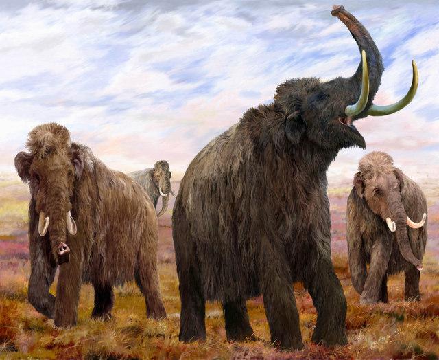 Woolly Mammoths (mural illustration) by Velizar Simeonovski. Copyright The Field Museum