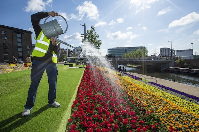 KX in Bloom - watering 35, 000 flowers on the steps between Granary Square and the Regent's Canal