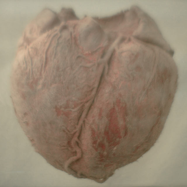 Balaenoptera bonaerensis (Antarctic Minke whale heart), Natural History Museum. Image courtesy of the artist and Kristin Hjellegjerde