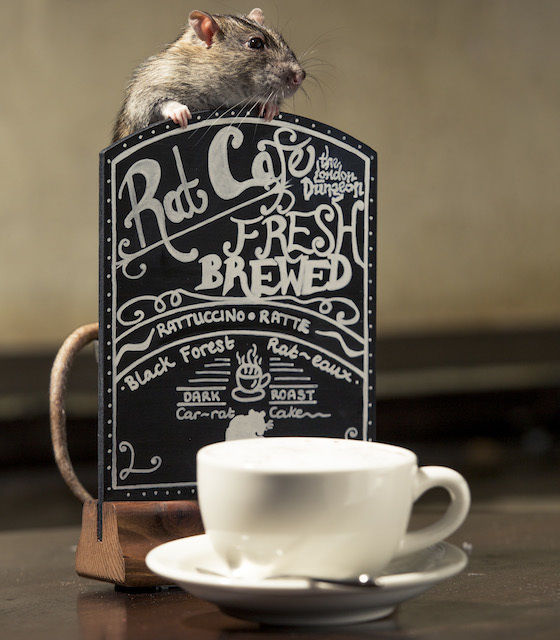 Rat Cafe Opens At London Dungeons Tomorrow
