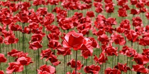 In Pictures: Poppies At The Tower Of London