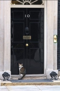 downing street cat