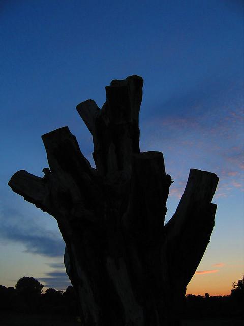 Tree time by MindSpigot (Dartmouth Park).