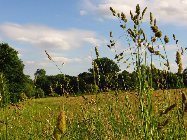 Summer Grass on Hampstead Heath by Laura Nolte.