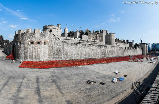 towerpoppies.jpg