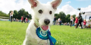 Barking Mad Fun In Battersea Park
