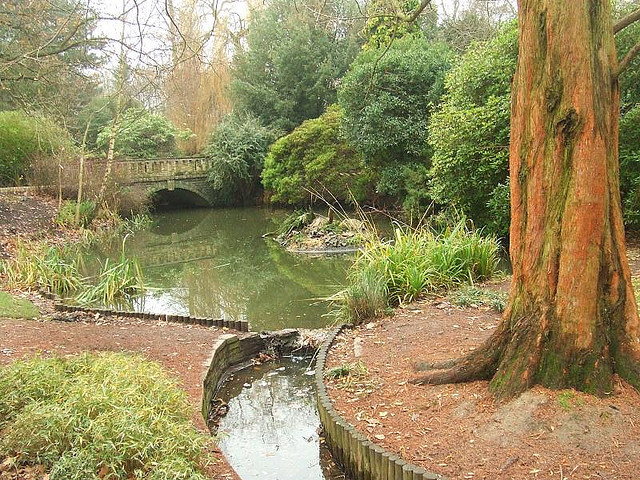Small pond in Peckham Rye Park, by Matt Brown