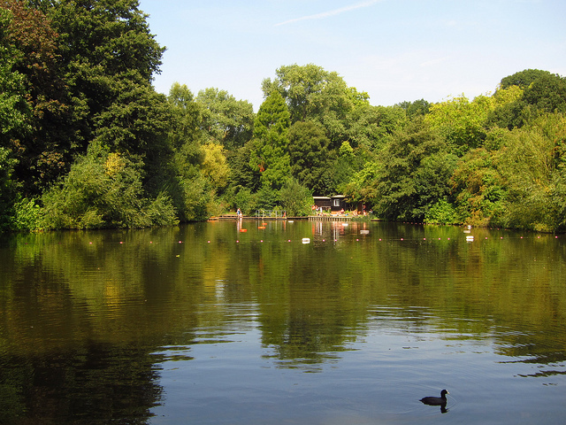 Mixed bathing pond in Hampstead Heath, by Laura Nolte