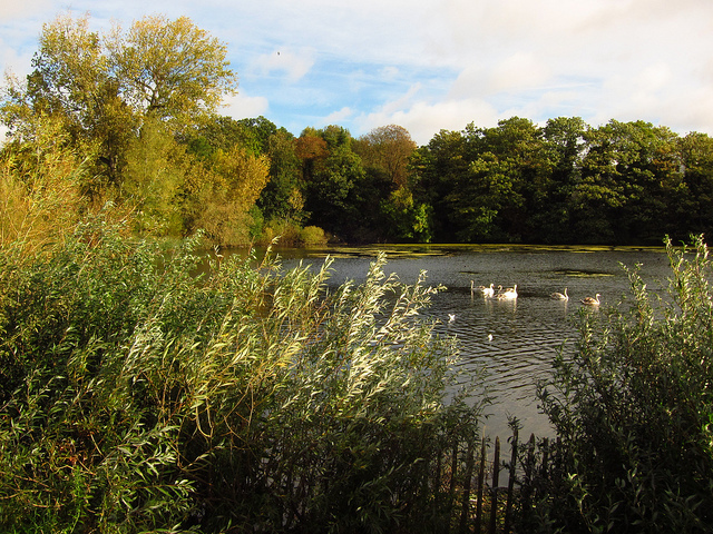 Highgate pond, by Laura Nolte