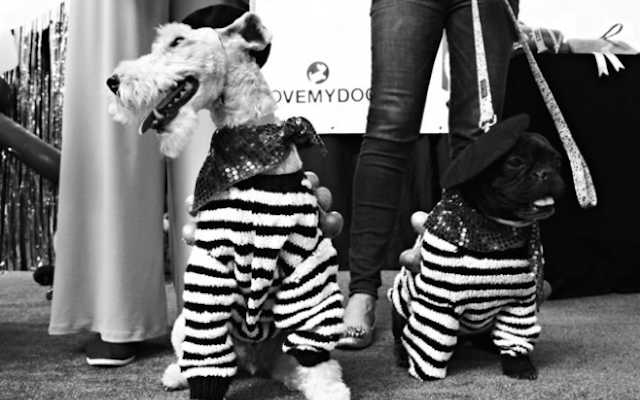 Dogs Strut Their Stuff At Paw Pageant 2014