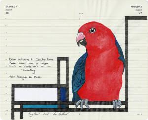 fran giffard king_parrot