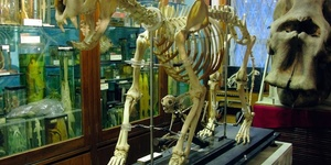 Families Invited To Explore Zoology At Grant Museum