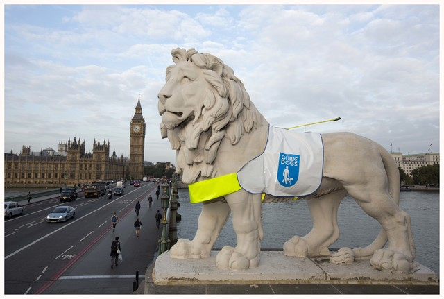 (c) gretel ensignia, gretel_ensignia@hotmail.com, 07783620234 The historic stone lion on London's South Bank is standing out for Guide Dogs this week as it proudly wears one of the charity's iconic harnesses. The statue, which looks out across the Thames and Westminster, is sporting the high viz installation as part of the celebrations for Guide Dogs Week (4-12 October). Find out how you can take part in a number of Let's Glow activities happening during Guide Dogs Week, by visiting: www.guidedogs.org.uk/guidedogweek 02.10.2014