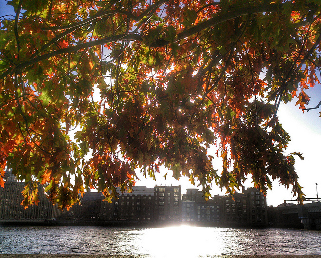 Autumn on the Thames, by Jerry Clark