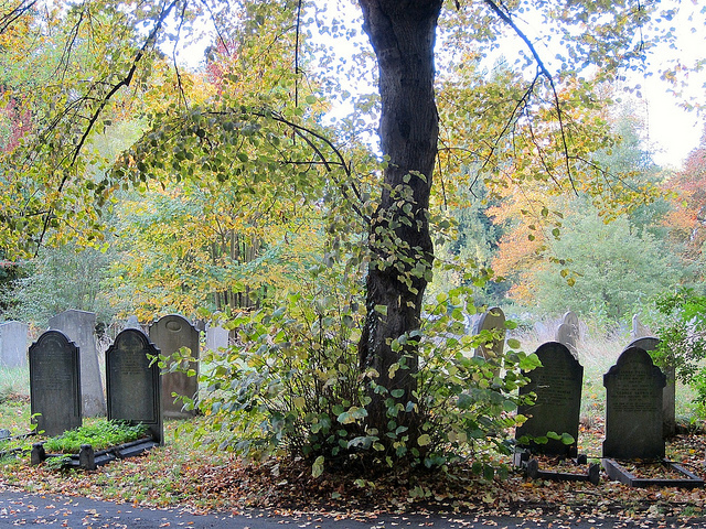 Autumn in Brockley Cemetery, by Andy Worthington
