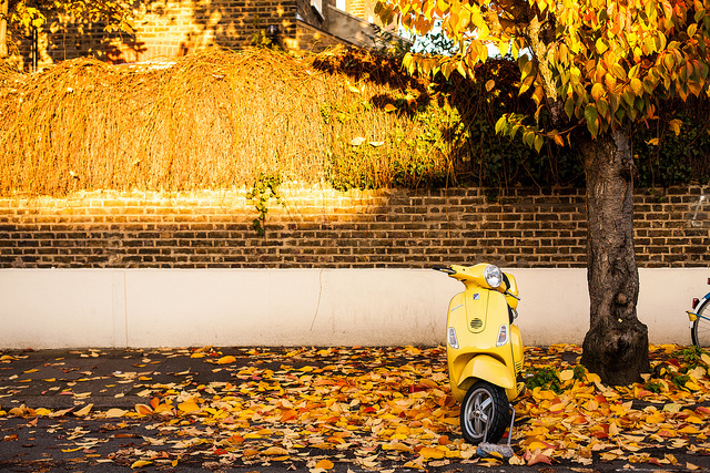 Autumnal scooter, by Richard Stern
