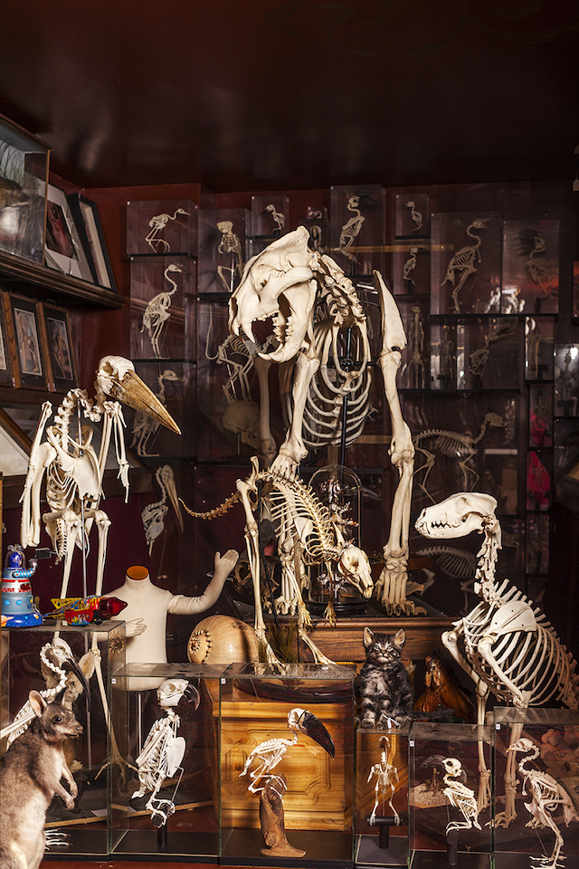 A selection of skeletons.
