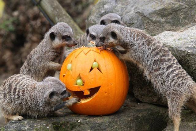 Things To Do in October Half Term: 25 October-2 November 2014
