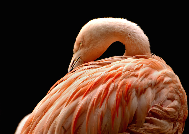 csc0053_psd_pink_flamingo_lior_saad_perfect-moment_junior.jpg