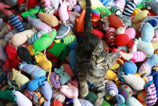 Knit Toys And Blankets For Battersea Cats