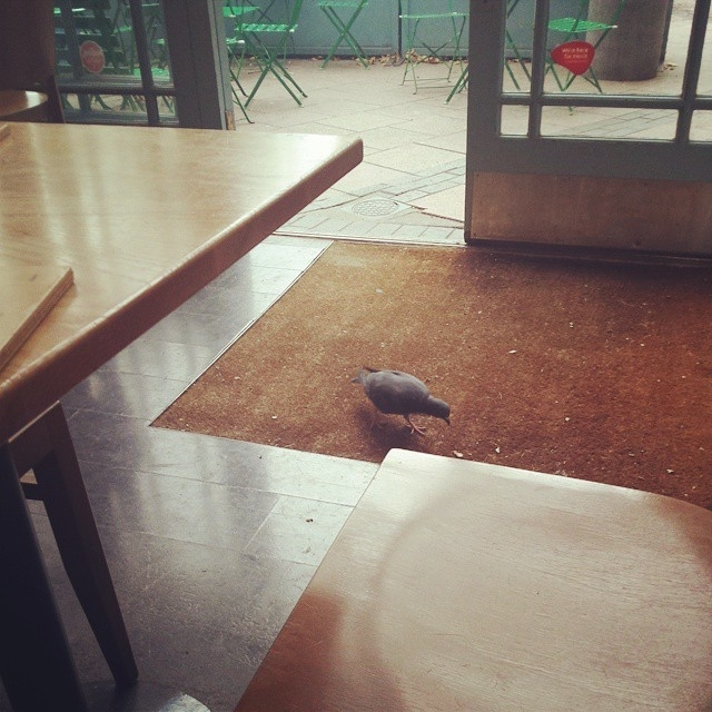 London Short Fiction: Vegan Pigeon Eater