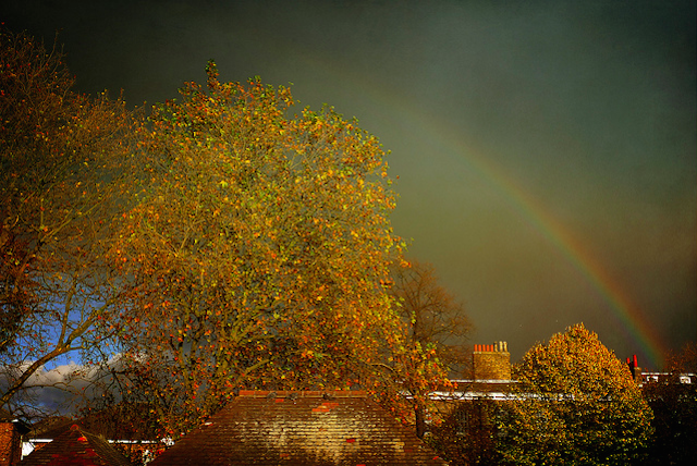 Beautiful autumnal rainbow, by Ekaterina Nosenko (Katia)