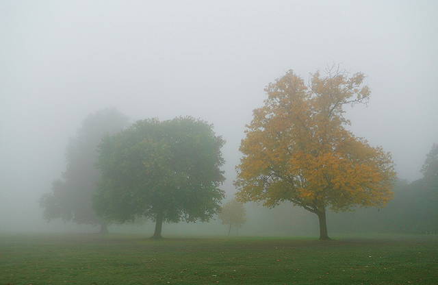 Autumn fog in Brockwell Park by Arpad Lukacs