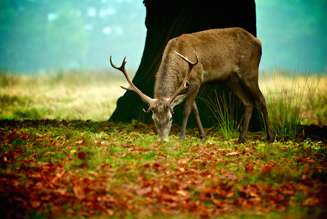 Autumn in Richmond Park, by Massimo Usai