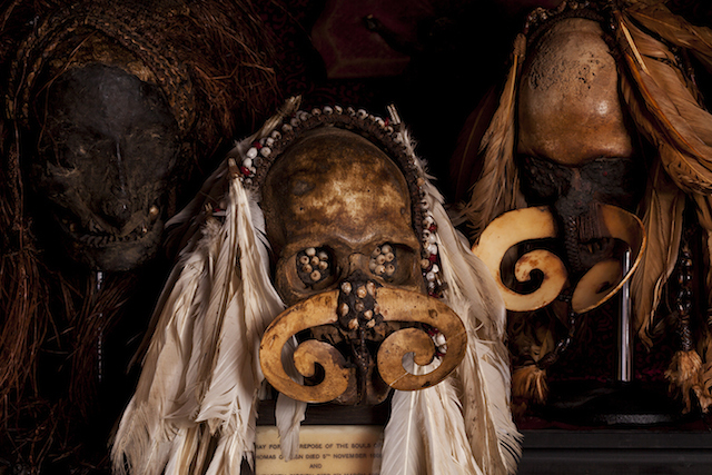 Tribal skulls from New Guinea.