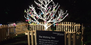 Nature Lights Up Christmas At Kew Gardens