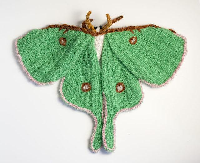 actias-luna-moth.jpg