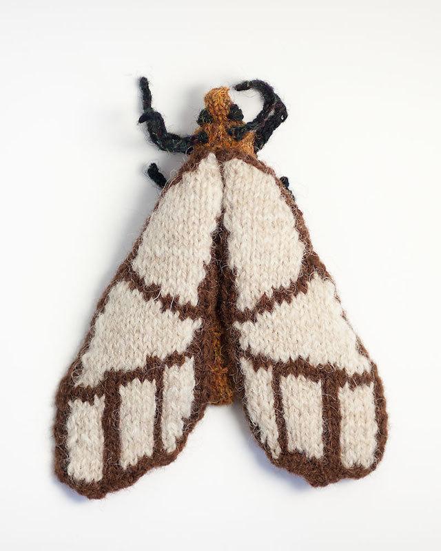 anaphe-panda-moth.jpg