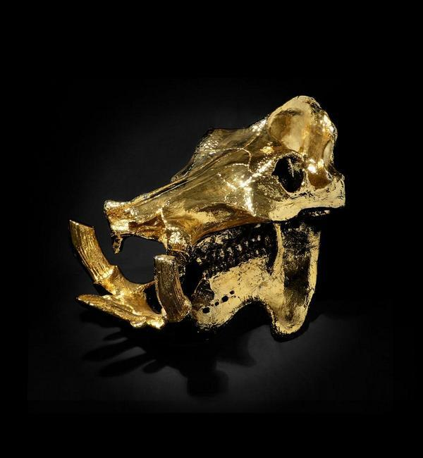 Drug baron Pablo Escobar imported hippos to Colombia. Did he really have one's skull gold-plated?