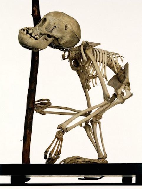 Skeleton 4
