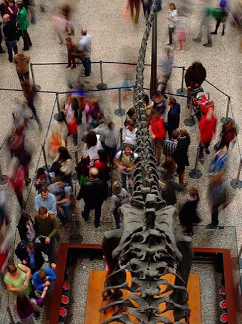An interesting angle of the famous Natural History Museum dinosaurs. Photo by Ian Muttoo