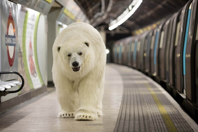 EDITORIAL USE ONLY An animatronic polar bear takes a walk down a platform at London Charing Cross station to mark the launch of Fortitude, Sky AtlanticÕs new drama starring Stanley Tucci, Michael Gambon and Christopher Ecclestone, which premieres on Thursday 29th January at 9pm. PRESS ASSOCIATION Photo. Issue date: Tuesday January 27, 2015. A team of 19 Hollywood prop specialists spent six weeks designing and building the realistic replica animal with six to eight people working on the costume at any one time, using over 60 types of materials, which included 90 square foot of sheet fur. Photo credit should read: David Parry/PA Wire