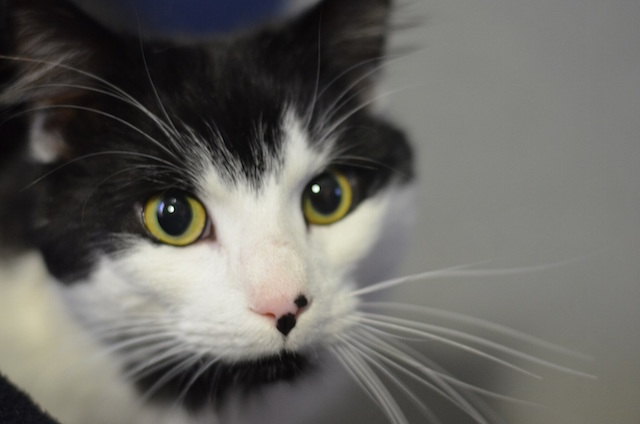 Ali is a two year old male Domestic Medium-Haired cat who loves the great outdoors.