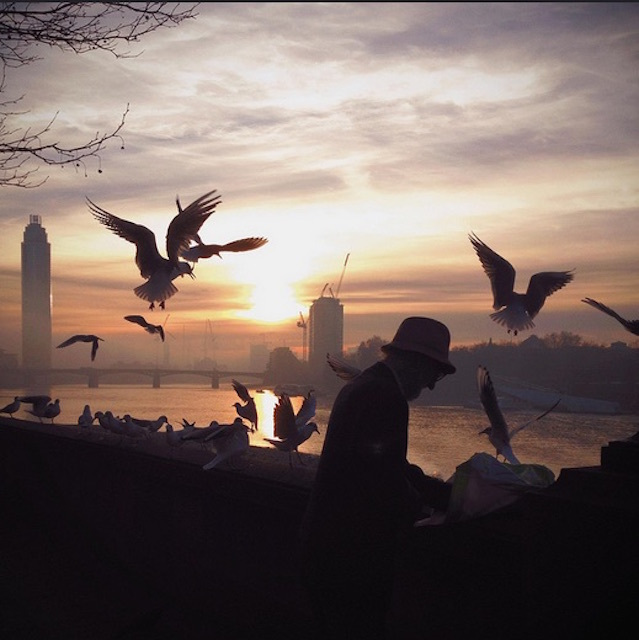 Feeding time on Albert Embankment in December 2013. Photo: Olly Denton