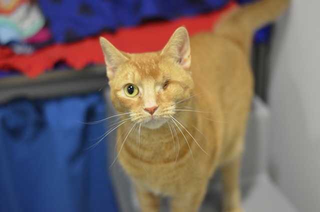 One year old Scarlet sadly lost an eye, but she is still very affectionate and loves people-watching.