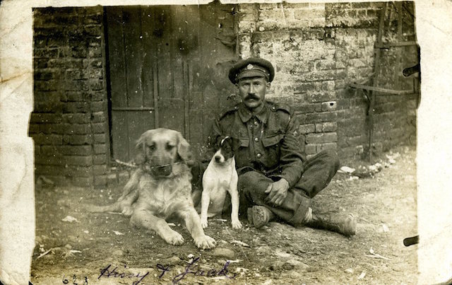 Staff Sergeant (Horse Farrier) of the Army Service Corps (ASC) with the Corp's pet dogs, Hissy and Jack. France, August 1916.