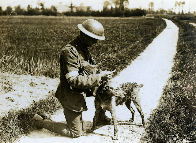 A member of 209th (Norfolk) Field Company, Royal Engineers, of the 34th Division, with his four-legged friend.