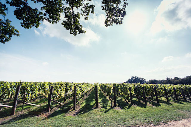 Win a private tour and a meal at the wine estate of Nyetimber