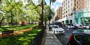 The Secret History Of The London Plane Tree