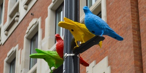 Spotted These Colourful Pigeons In Soho Square Yet?