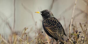 What Are The Most Common Birds In London?